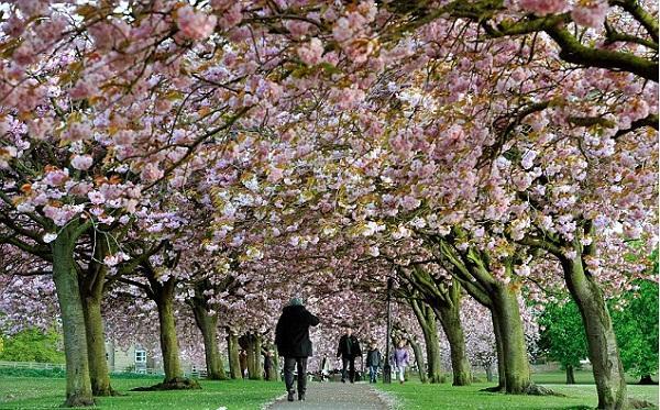 Mùa xuân ở London