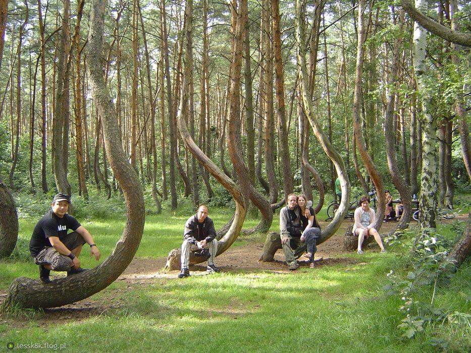 Khám phá khu rừng Cong bí ẩn ở Balan