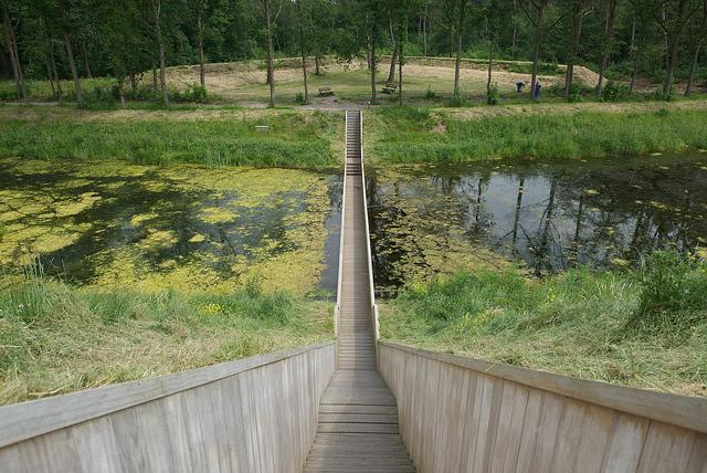 Trải nghiệm với cây cầu tàng hình ở Hà Lan