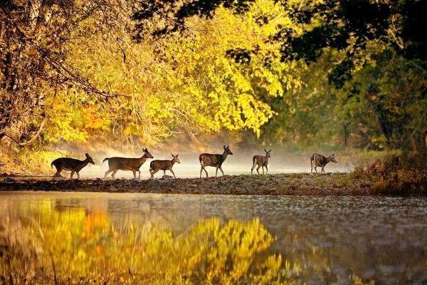 Mơ màng Rừng Đen nước Đức vào thu