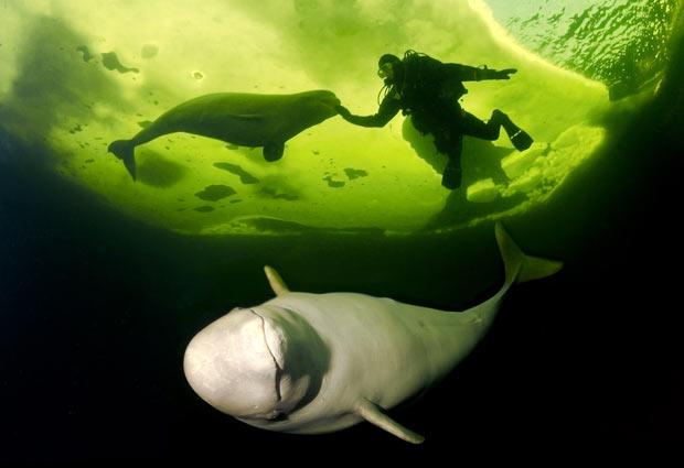 Trải nghiệm lặn biển băng độc đáo ở Nga