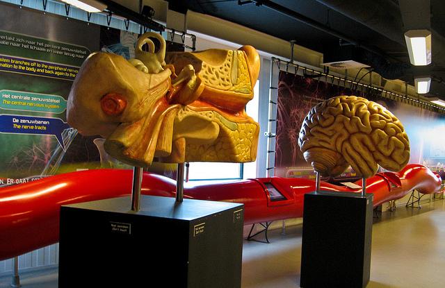 Corpus - bảo tàng độc đáo về cơ thể người