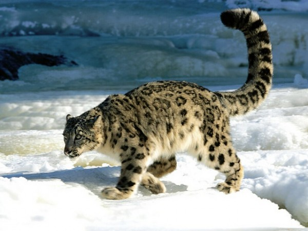 Altai - dãy núi hùng vĩ và huyền bí nhất thế giới
