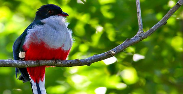 thế giới tự nhiên Las Terrazas ở Cuba