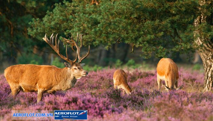 Công viên Quốc gia Hoge Veluwe có rất nhiều động vật hoang dã