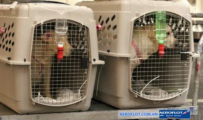 Với những động vật dễ gây nguy hiểm chúng cần đặt trong lồng cố định