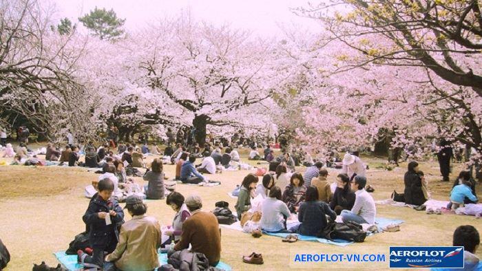 Lễ hội hoa anh đào Nhật Bản rực rỡ