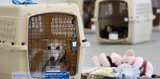 vận chuyển vật nuôi Aeroflot