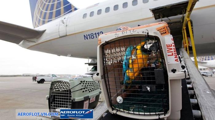 Việc vận chuyển thú cưng cần phải đảm bảo giấy tờ và tuân thủ các quy định hàng không